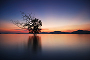 Tropical Sunset Originals - Silhouette of trees by Teerapat Pattanasoponpong