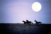 Wild Horse Prints - Silhouette Of Wild Horses Running In Field At Dusk With Moon Print by Jake Rajs