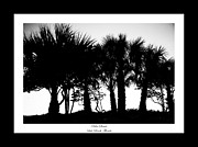 Lido Prints - Silhouette Palm Sunset Print by Betsy A Cutler East Coast Barrier Islands