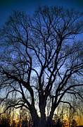 Branches Art - Silhouette by Scott Norris