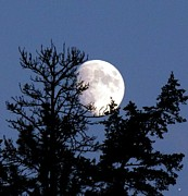 Moonlight Photos - Silhouetted By The Moon by Will Borden