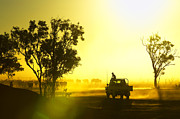 Cattle Dog Art - Silhouetted Cattle Muster At Sunset, Armraynald Station by Johnny Haglund