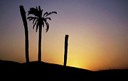 North Africa Framed Prints - Silhouetted palm trees at sunset in the Sahara Desert Framed Print by Sami Sarkis