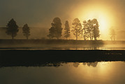 Water And Plants Art - Silhouetted Trees Along The Yellowstone by Tom Murphy