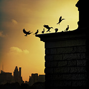 In-city Posters - Silhouettes Of Cormorants Poster by Istvan Kadar Photography