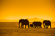 Tusk Prints - Silhouettes Of Elephants Print by Konstantin Kalishko