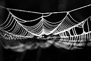Spiderweb Prints - Silk River Print by Jan Piller