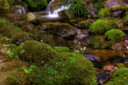 Babbling Originals - Silky Cascades by John Absher