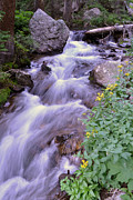 ZawHaus Photography - Silky Stream