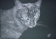 Cats Drawings Originals - Silver Cat by Cybele Chaves