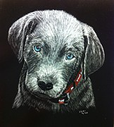 Scratchboard Paintings - Silver Lab Beauregard by Lisa Baker