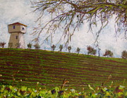 Napa Pastels - Silver Oaks  by Anthony George