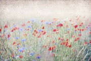 Monika Strigel Acrylic Prints - Silver Poppy Meadow Acrylic Print by Monika Strigel