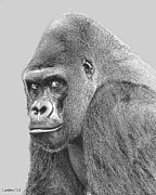 Ape. Great Ape Prints - Silverback 5 Print by Larry Linton