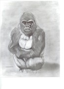 Gorilla Drawings - Silverback Gorilla by Don  Gallacher