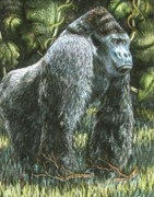 Gorilla Drawings - Silverback-King of the Mountain Mist by Beverly Fuqua