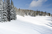 Silverstar Meadow Snow Covered Alpine Meadow Silver Star Print by Andy Smy