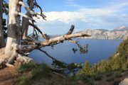 Mountains And Lake Prints - Silvery Tree over Crater Lake Print by Carol Groenen