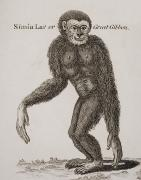 Anthropomorphism Framed Prints - Simia Lar, Great Gibbon. Engraved By Framed Print by Ken Welsh