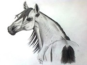 Wild Horse Drawings - Simple beauty by Maliha Farid