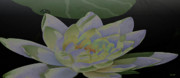 Design And Photography. Paintings - Simple Lily by Debra     Vatalaro