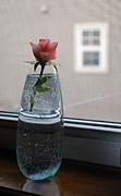 Amee Stadler - Simple Rose