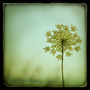 Botanical Metal Prints - Simplexity Metal Print by Irene Suchocki