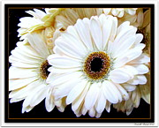 Marguerites Framed Prints - Simplicity Framed Print by Danielle  Parent