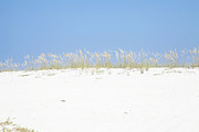 Sea Oats Photo Framed Prints - Simplicity Framed Print by Toni Hopper