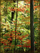 Simply Autumn Print by Joan  Minchak
