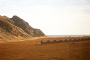Sinai Prints - Sinai Peninsula  Print by Munir Alawi