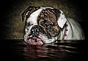 Bulldog Digital Art - Since You Went Away by Marius Sipa