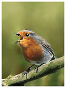 Morning Mixed Media Posters - Sing Red Robin Sing Poster by Michael Greenaway