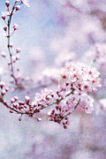 Cherry Blossoms Metal Prints - Sing To Me Metal Print by Rebecca Cozart
