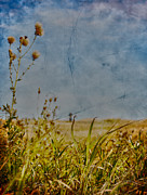 Edmonton Photographer Photo Prints - Singing In The Grass Print by Jerry Cordeiro