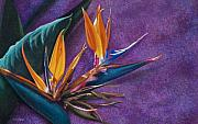 Bird Of Paradise Drawings - Single Flight by Donna Slade