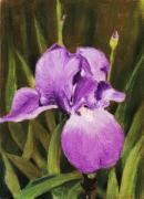 Flower Pastels Prints - Single Iris Print by Anastasiya Malakhova