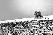 Winter Trees Photos - Single by Julie Lueders