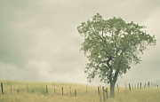 Overcast Prints - Single Oak Tree Print by Pamela N. Martin
