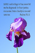 Color Purple Framed Prints - Single Purple Iris with Scripture Framed Print by Linda Phelps