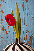 Red Leaf Posters - Single Red Tulip Poster by Garry Gay