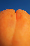 Apricots Prints - Single ripe apricot Print by Sami Sarkis