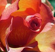 Single Rose Print by Gwyn Newcombe