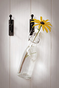 Water Bottle Posters - Single Rudbeckia Flower Poster by Christopher and Amanda Elwell