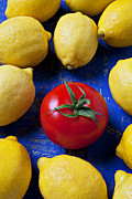 Food And Beverage Prints - Single tomato with lemons Print by Garry Gay