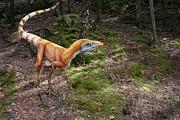 Julius Csotonyi - Sinosauropteryx