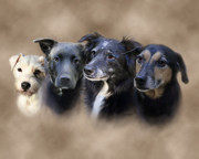 Dogs Digital Art Prints - Siss Buddies Print by Barbara Hymer