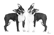 Terriers Drawings Prints - Sisters from Boston Print by Murphy Elliott