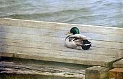 Dock Photos - Sittin On the Dock by Rebecca Cozart