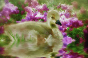 Waterfowl Mixed Media Framed Prints - Sitting Among the Lilacs Framed Print by Elaine Manley